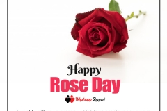 best rose day image