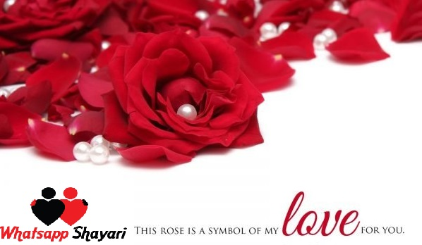 Top 5 Rose Day Wishes and Status